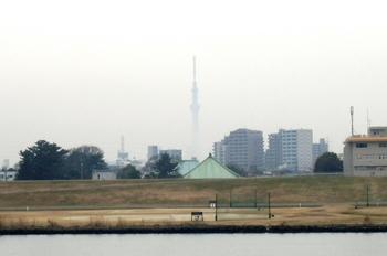#01もやに浮かぶ東京スカイツリー(手前は善養寺).jpg