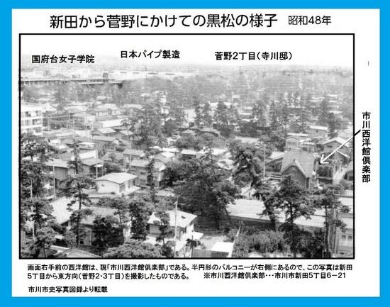 #04市川市新田菅野の黒松の様子.jpg
