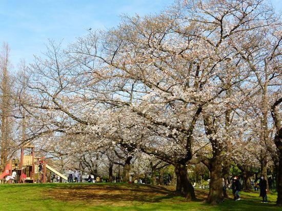 #11篠崎公園P077.jpg