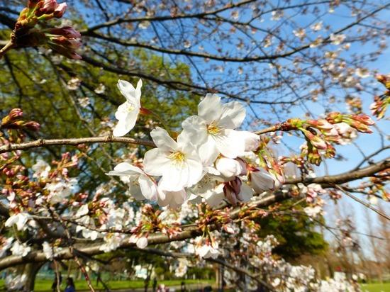 #13篠崎公園P065.jpg