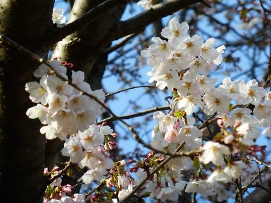 #15篠崎公園P072.jpg
