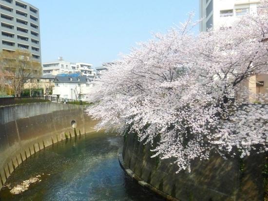 $15青丸⑧滝野川橋付近より下流方向P329.jpg