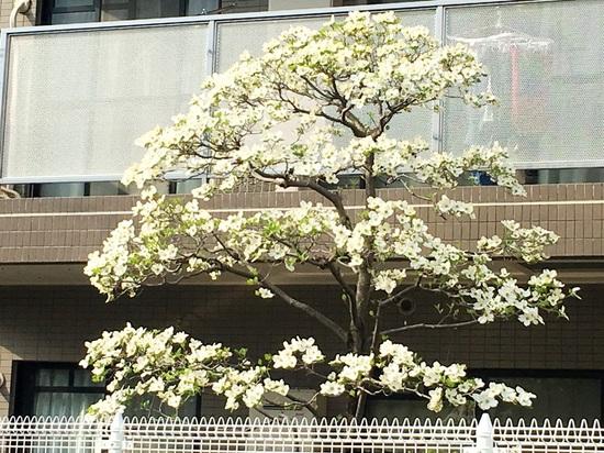 &03平田3丁目G_6364.jpg