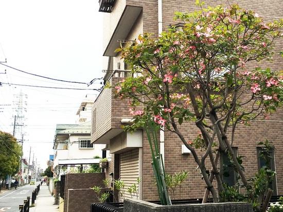 &07新田2丁目G_6391.jpg