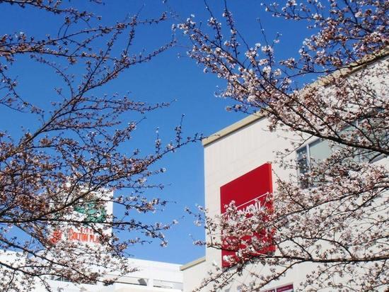 A02G3737コルトンプラザの桜2.jpg